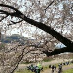 【特集|桜の季節がやってきた!】ママバッグを使ったお花見コーデって?