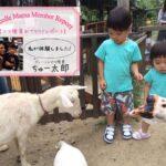 【ハーベストの丘 おでかけレポート】動物と触れ合える!夏限定のじゃぶじゃぶ広場も開催中!
